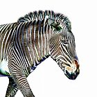 Zephyrus Zebra III by Sheila Laurens
