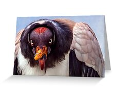 King Vulture trying to intimidate me (with a special shoutout to Steve Randall) Greeting Card