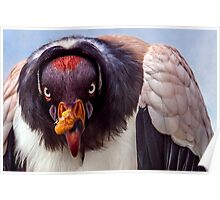 King Vulture trying to intimidate me (with a special shoutout to Steve Randall) Poster