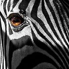 Zebra Eye by Kathy Weaver