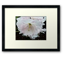 Blessed by the Rain Framed Print