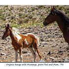 Paint Foal and Mom, Virginia Range Wild Mustangs, TRI, NV by Ellen  Holcomb