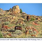 &quot;Comstock Gold&quot; wild mustangs of the Virginia Range, NV by Ellen  Holcomb