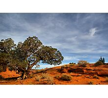 Juniper  tree in Mystery Valley Photographic Print