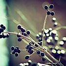 bokeh berries by Stephanie Aughenbaugh
