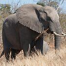 Elephant and calf by Vickie Burt