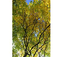 Salcey Forest in Autumn Photographic Print