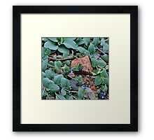 Blue Oyster Plant Framed Print