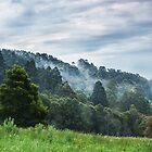 Dandenong Ranges, Australia by WavesPhotograph