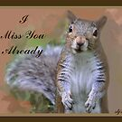 Missing You Squirrel by budrfli