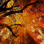 Autumn Leaves by Barbny