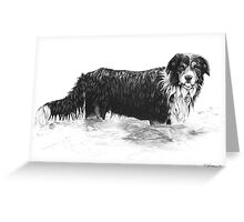 Dog in Water - Boarder Collie Greeting Card
