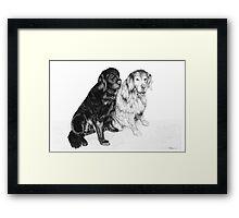 Charlie and Alfie - Golden Retrievers Framed Print