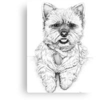 Westie - West Highland Terrier Canvas Print
