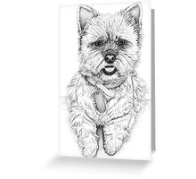 Westie - West Highland Terrier Greeting Card