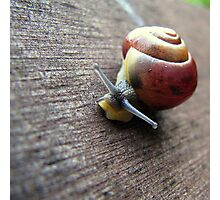 Snail on the gardenseat Photographic Print