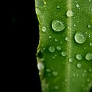 Rain Drops On Leaf by abocNathan