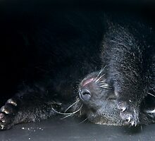 Basking Binti by Corrine Symons