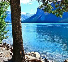 Seasonal Nature by Linda Bianic