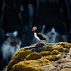 Puffin by Eoghansandberg