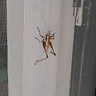 The Bug..in our hotel room.. by fladelita