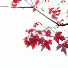 red autumn leaves on a branch by hpostant