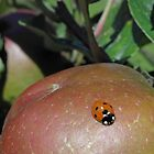 Ladybird apple. by Elisabeth Thorn