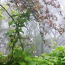 Misty Entanglements by Redviolin