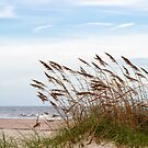 Sand Dunes and Sea Oats by dawnamoore