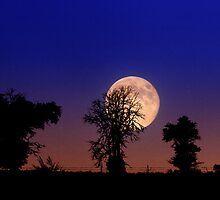 Blue Moon over Buffalo Gap National Grassland by Alex Preiss