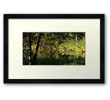 Great Blue Heron Reflecting Framed Print