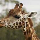 G for Giraffe by AngelaHumphries