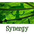 Synergy by Doreen Erhardt