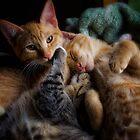 Fur & Purr by Scott Allan