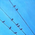 Birds Wires 9 by eolai