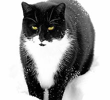 Felix in Snow by SpinningAngel
