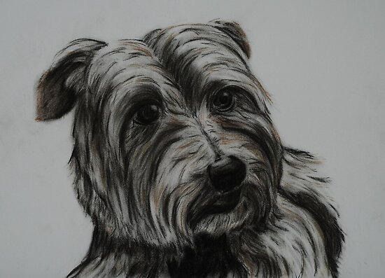 Tinted charcoal terrier by gogston
