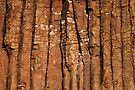 Detail of Devils Tower  by Alex Preiss