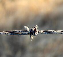 Frigid Fencing by Carolyn  Fletcher