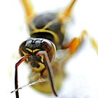 Wasp by lumiwa