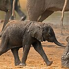 Wait for me! by Explorations Africa Dan MacKenzie