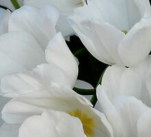 White Tulips by Colleen Drew
