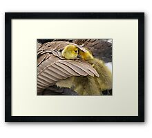 Wake up little brother, its time to play Framed Print