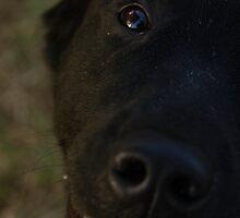 Pet Portrait - Black Labrador by Noth
