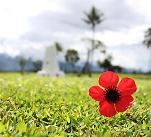 Kokoda Memorial Poppy by BenClarkImagery