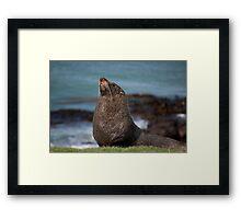 Sea Lion, Moeraki, New Zealand Framed Print