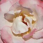 Shabby Chic Rose by SizzleandZoom