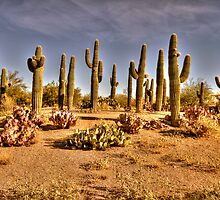 Cactus Patch by George Lenz