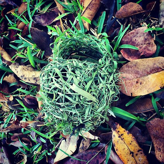 Fresh Bird Nest by tropicalsamuelv