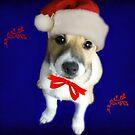 Santa Dog 2 by vic321
